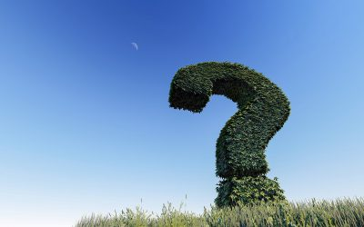 Waarom vragen over aanbestedingsprocedures meer oplevert dan klagen